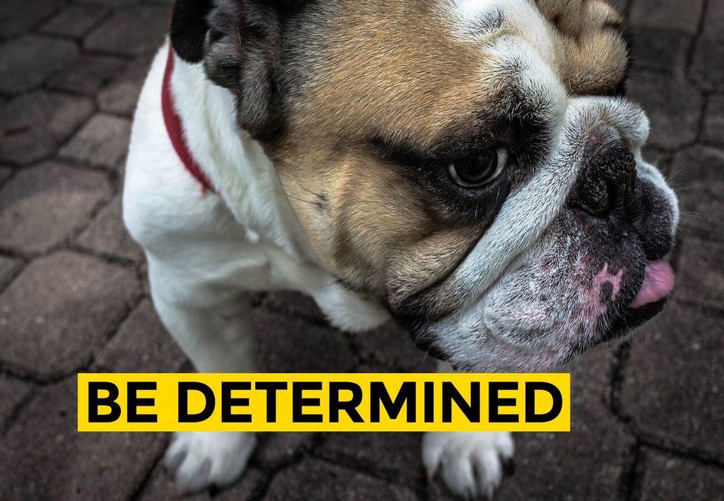 Bulldog tenacity